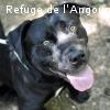 DIABOLO (ex Jango)